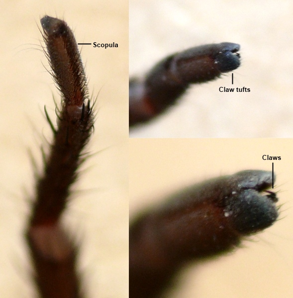 Trapdoor Spiders Bite: The Find-a-spider Guide