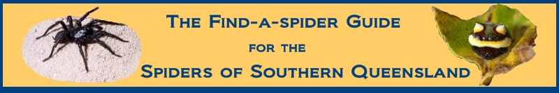 The Find-a-Spider Guide
